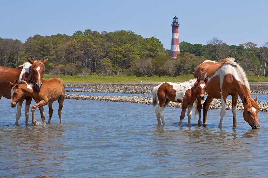 Assateague Island Tours